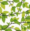 Finlayson Lautasliina Kesäkuu Vihreä 24Cm 20Kpl