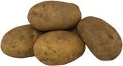 Jauhoinen peruna harjattu