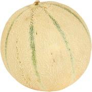 Cantaloupe Meloni Rannikon Puutarhalta