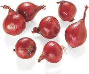 Punasipuli
