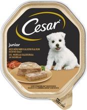 Cesar Junior Kalkkunaa...