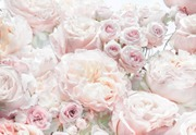 Komar Valokuvatapetti Spring Roses 8-976, 8-Osainen 368X254