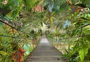 Komar Valokuvatapetti Jungle Trail 8-977, 8-Osainen 368X254