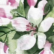Pentik Lautasliina Tissue  Omenankukka Vaaleanpunainen 24Cm 20Kpl