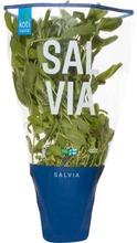 Kotimaista Suomalainen Salvia Ruukussa
