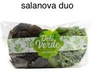 Salanova Duo Punainen Ja Vihreä Salaatti