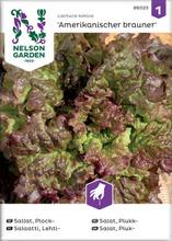 Salaatti, lehti-,  amerik