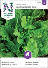 Salaatti, lehti-, austral
