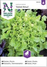 Salaatti, tammenlehti-, s