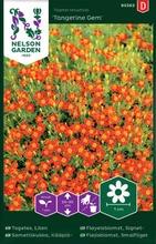 Nelson Garden Siemen Samettikukka, Kääpiö-, Tangerine Gem