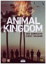Dvd Animal Kingdom - Kausi 1