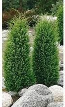 P-Plant Pilarikataja 5...