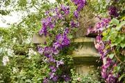 Patiokärhö So Many Lavender Flowers