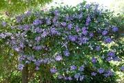 Patiokärhö So Many Blue Flowers