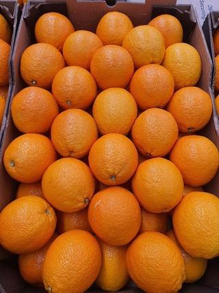 Appelsiini Valencia Late E-A