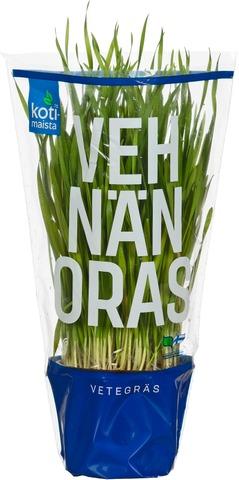 Kotimaista suomalainen vehnänoras ruukussa