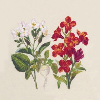 Duni Paper+ Design 25Kpl 24Cm 2-Krs Naturals Botanical Lautasliina