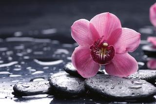 Fototapetti Orchid Ms-5-0120 3,75M X 2,5M